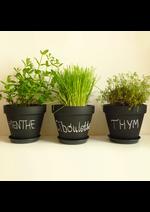 Catalogues et collections Au-delà des saisons : Les plants et les herbes aromatiques sont arrivés !!