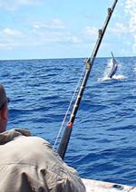 Promos et remises  : Retrouvez la sélection mer