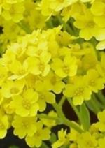 Catalogues et collections Botanic : Créez votre massif de vivaces