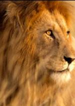 Catalogues et collections  : Respectez l'instinct de votre animal